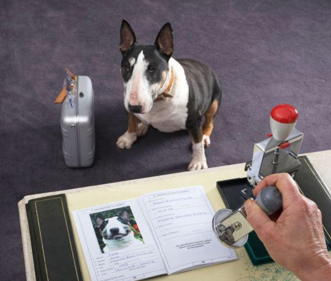 Ветеринарная справка ф1