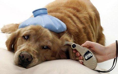 Терапия животных