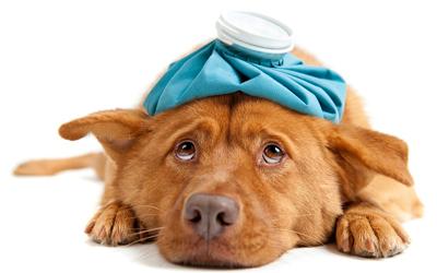 Терапия для животных